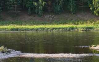 Летняя ловля голавля образ жизни рыбы и выбор удочки