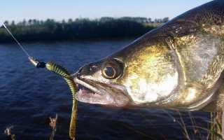 Снасти для ловли судака и подготовка оснастки к рыбалке