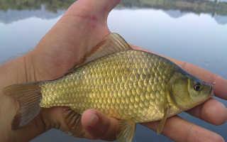 Рыбалка на пенопласт и детали подготовки снасти
