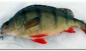 Озеро Тенис. 20 (кг) Окуня за 2 Дня. Рыболовные Отчеты