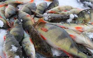 Рыбалка летом как правильно ловить сазана