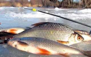 Зимняя снасть на плотву: виды, элементы оснастки