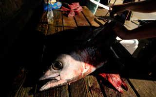 Американский рыбак нашел в рыбе мужские гениталии