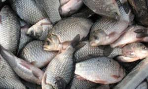 Рыбные места в Балашихе: плюсы и минусы