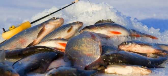 Лучшие наживки для зимней рыбалки