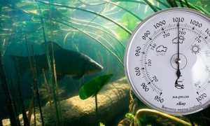 При каком оптимальном давлении лучше всего клюет рыба