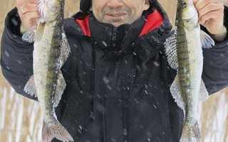 Проводка зимней блесны при ловле щуки и судака в отвес