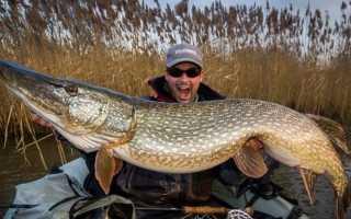 Какая самая большая щука пойманная в России и Мире фото и видео