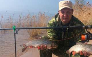 Голавль на донку: когда и как правильно ловить рыбу
