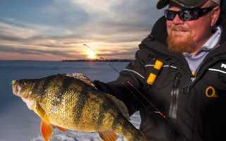 О ловле окуня на блесну зимой: лучшие покупные и самодельные приманки, техника и тактика ловли на них