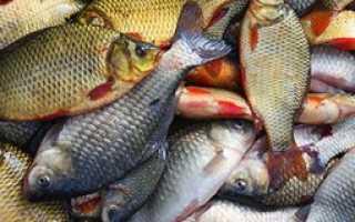 Внимание! описторхоз у рыб обь-иртышского бассейна
