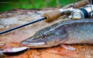 Ловля щуки в октябре на спиннинг — советы рыбакам
