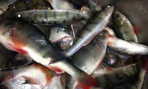 Рыбные места в Калининградской области и Калининграде: плюсы и минусы