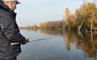 Рыба жерех фото, особенности и ловля разными способами