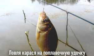 Ловля карася на поплавочную снасть и выбор прикормки и насадки