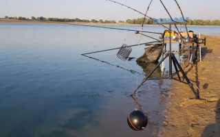 Учимся ловить на фидер или первые шаги в мир рыбалки