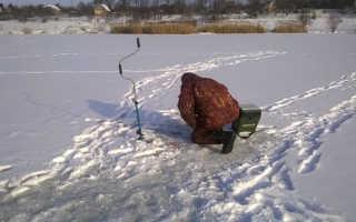 Специфика зимней ловли форели на платных водоемах
