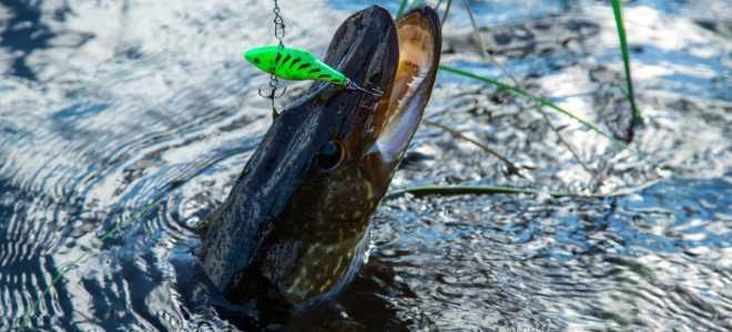 Рыбные места в Ярославле и Ярославской области: плюсы и минусы