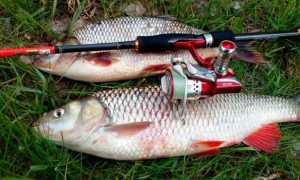 Как ловить голавля на спиннинг
