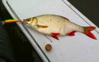 Рыбалка на краснопёрку