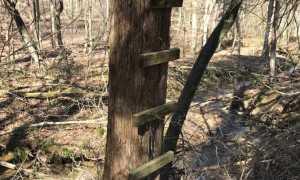 Лабаз для охоты: как построить и сделать своими руками