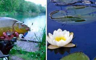 Рыбалка на линя поплавочной удочкой сбор снасти и поиск перспективных мест