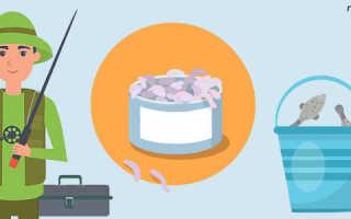 Как разводить опарышей в домашних условиях разными способами