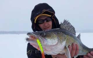 Судак в рюкзаке не потому, что рыба-дура, а потому, что рыбак не дурак, как можно поймать судака зим