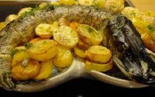 Рецепт фаршированной щуки, запеченной с картошкой