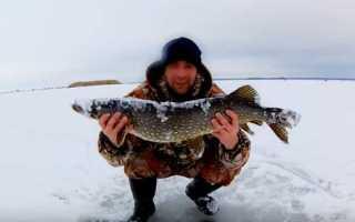 Рыбалка в феврале: какую рыбу и на что ловить