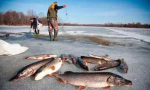 Перед сетью рыбы не ловят, или как ловить зимой сетями