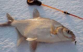 Рыбалка на леща в феврале