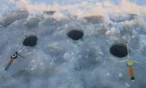 Как ловить окуня зимой на балансир, мормышку и блесну