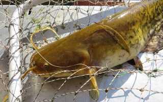 Снасти для рыбалки на сома