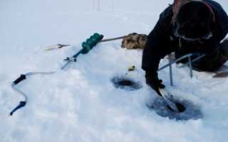 Хитрости и нюансы ловли налима зимой