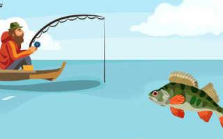 Всё что нужно знать об окуне – Всё о рыбалке