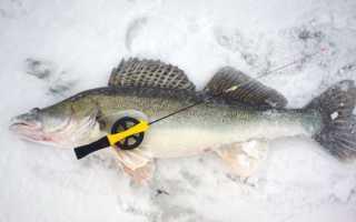 Как ловить судака на бокоплав