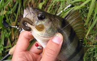 Съедобная резина – отличная наживка для рыбалки на щуку или окуня