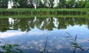 Рыбалка в июле
