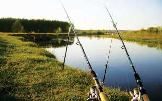 Фидерная ловля: описание и фото