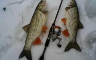 Ловля голавля зимой: на что ловить, прикормка и снасти