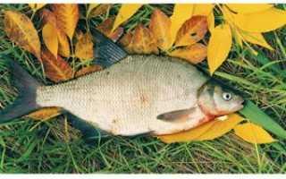 Рыбалка на леща в октябре