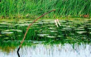 Жерлица на щуку летом: как правильно сделать, техника ловли